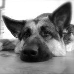 @germanshephard's Profile Picture