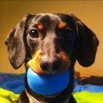@crusoe_dachshund's Profile Picture