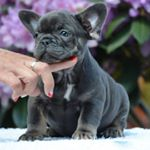 @frenchie.world's Profile Picture