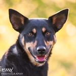 @gopro.paws's Profile Picture