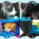 @my4_cats's Profile Picture