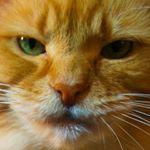 @lunaturdcat's Profile Picture