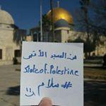 @state.of.palestine's Profile Picture
