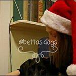 @cosmic.pets's Profile Picture