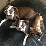 @dmp_triple_pups's Profile Picture