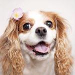 @oliveyoumore_cavalier's Profile Picture