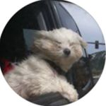 @ser_drewskii's Profile Picture