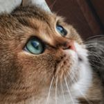 @jupiter_the_brit_cat's Profile Picture