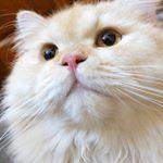 @meepocat's Profile Picture