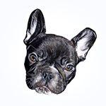 @einolefrenchie's Profile Picture