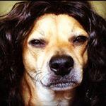 @rockstarstu's Profile Picture