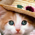 @funny.animals.clips's Profile Picture