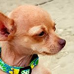 @skippyhappyon3's Profile Picture