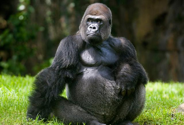 When It Comes to Market Leadership, Be the Gorilla | First ...