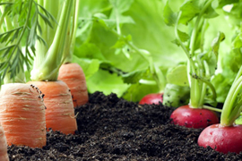 Check-out-in-detail-the-4-benefits-of-organic-farming_M.jpg