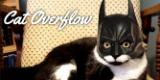 Cat Overflow