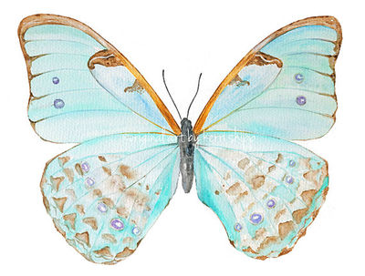Butterfly-etsy