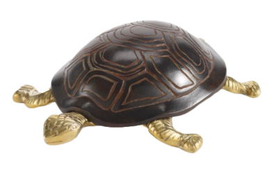 Turtle-cwonder