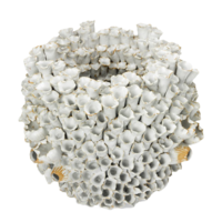 Ceramic-barnacle-williams-sonoma-home