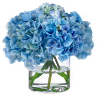Hydrangea-diane-james-home
