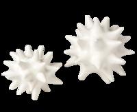 Urchin_objet-white