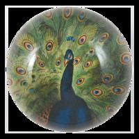 Peacock-john-derian
