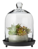 Glass-cloche