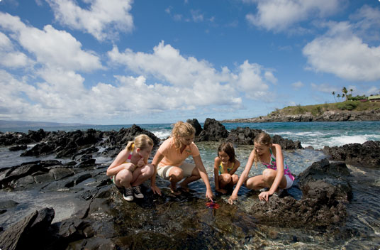 Product Life At The Edge of The Sea - Age 5-14 Only