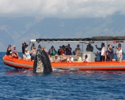 Product Private Raft Whale Watch