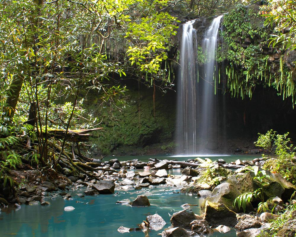 Ultimate Hana Waterfall/Rainforest Hike