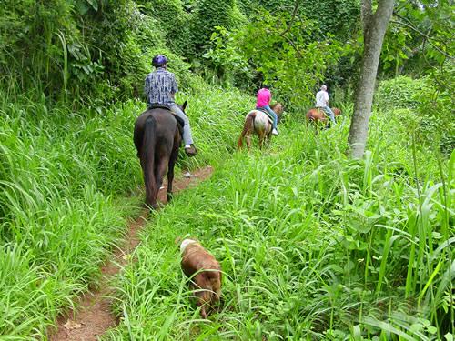 Product Private Horseback Ride