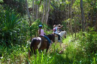 Product Napili West Maui Horseback Ride