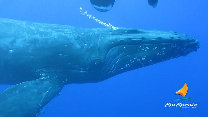 Product South Maui Whale Watch