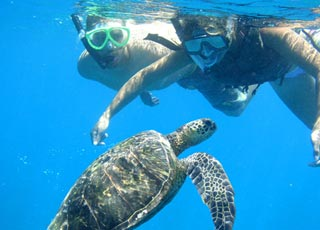 Product South Shore Turtle Kayak Tour - 4.5 Hours