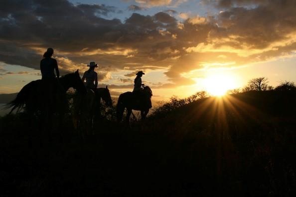 Product Lahaina Sunset Horseback Ride