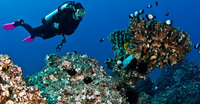 Product Certified Molokini and Drift Dive