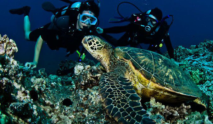 Product Certified Molokini & Turtle Town Dive