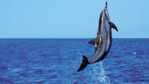 Product Lanai Snorkel & Dolphin Watch