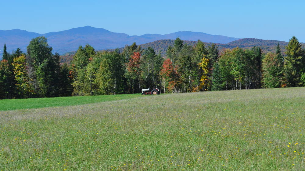 Vermont Farm and Maple Forest