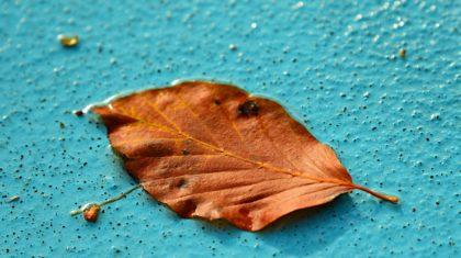 leaf on pool