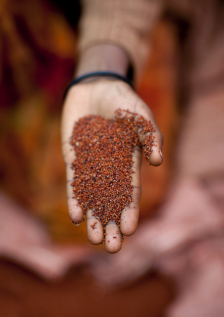 What You Need To Know About Teff: The Gluten-Free Grain Of The Future!