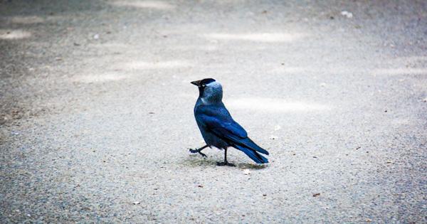 Marching Bird