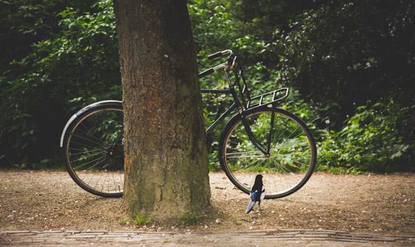 Bike & Bird