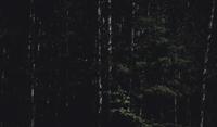 Woods - Three Lakes