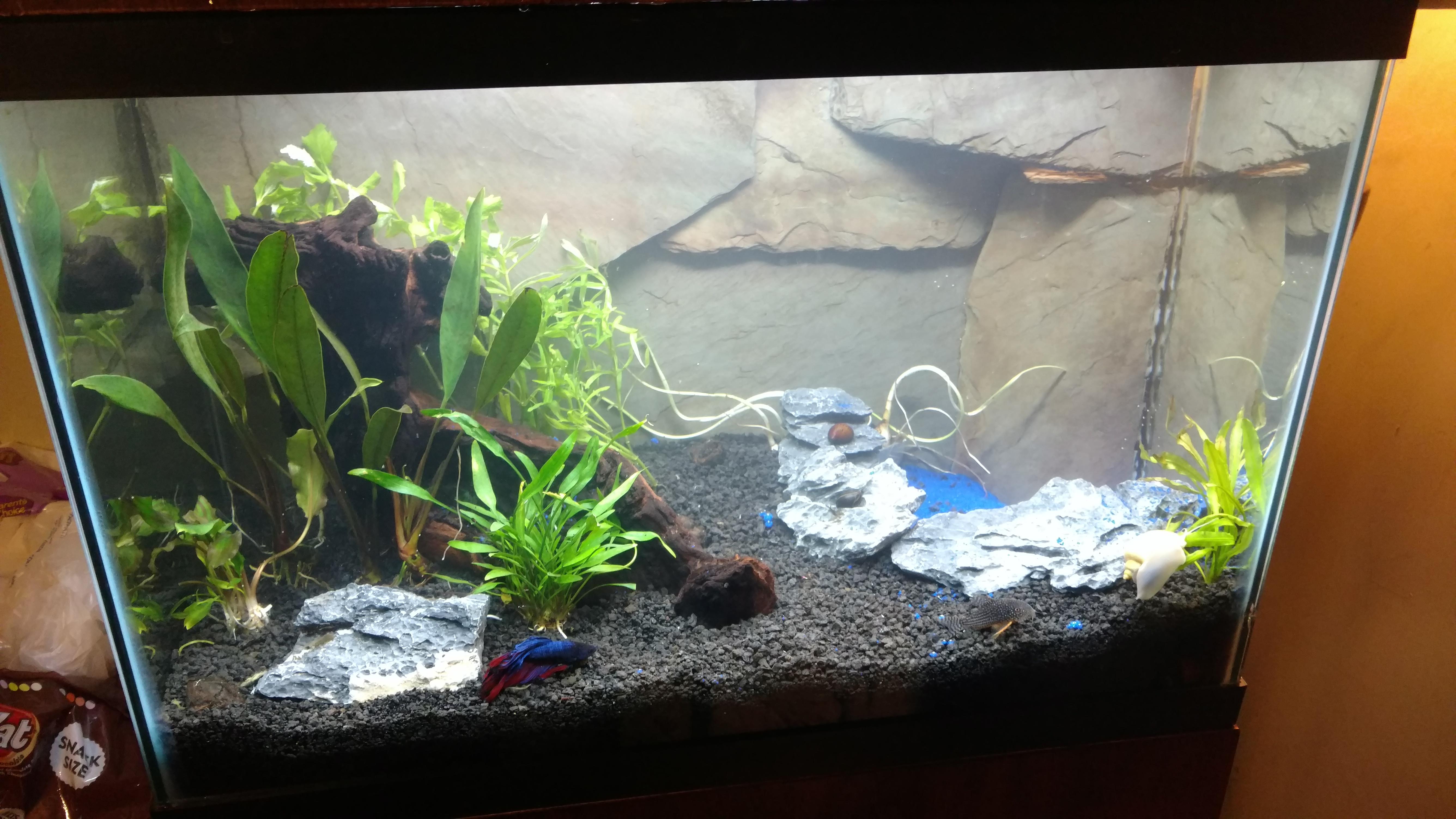 Box Of Low Light Plant Package Aquarium Co Op