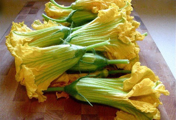 Stuffed_zucchini_blossoms_to_catch_a_cook_emilywelsh_2_(1)