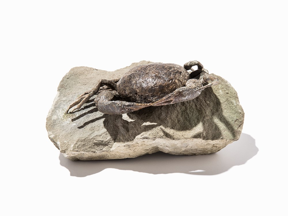 Fossil Crab, New Zealand, Miocene