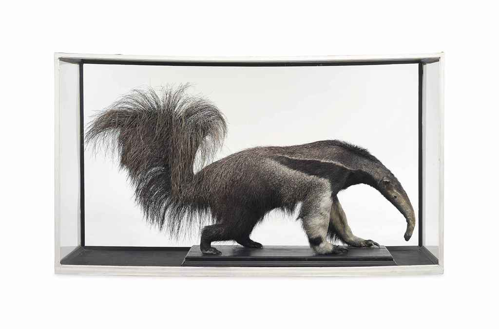 A TAXIDERMY ANTEATER