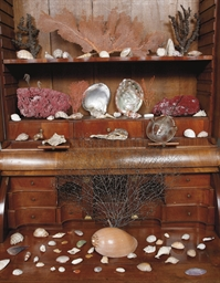 A COLLECTION OF SEVENTY VARIOUS CORALS, SHELLS, FISH AND A HORSESHOE CRAB