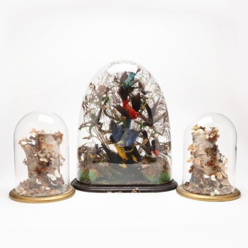 Three Victorian Taxidermy Displays